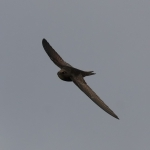 Common Swift